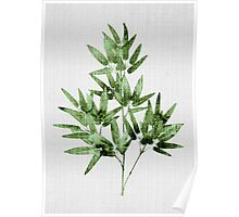 Tropical#5 - Bamboo Leaf Poster