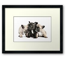 Frenchie Pals Framed Print