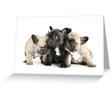 Frenchie Pals Greeting Card