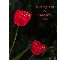 Two Red Tulips Wishing You a Wonderful Day Photographic Print