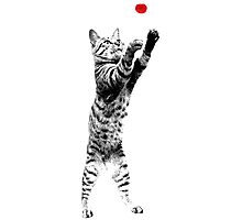 Cat playing with red ball Photographic Print