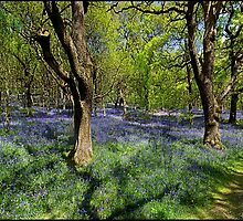 Bluebell Wood by ten2eight