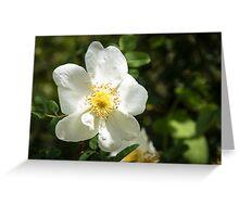 White petal Greeting Card