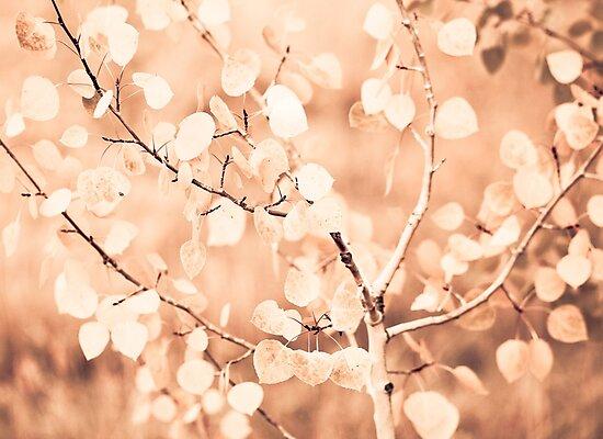 Leaves by Jen Wahl