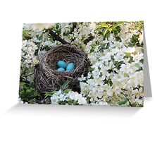 Robin Eggs Greeting Card