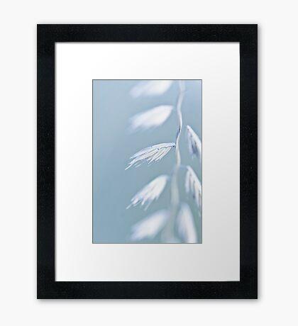 Seed Framed Print