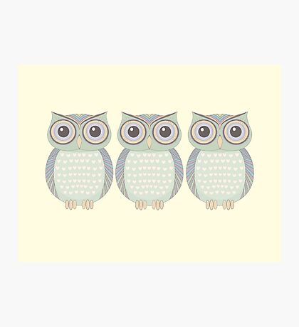 Cool Owl Trio Photographic Print