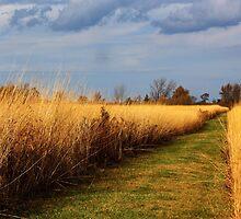 Wyandot Wetland Meadows Preserve by Shawna Rowe