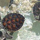 Baby Sea Turtles by LindaR