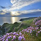 Cornwall: Sea Pinks on the Coast by Rob Parsons