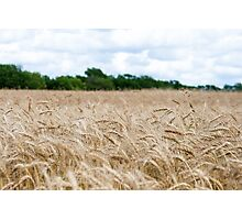 Field On A Warm Summer Day Photographic Print