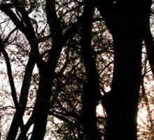 Sunset Through the Trees Sticker