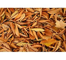 Orange Fall Leaves Photographic Print