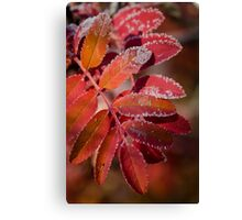 Mountain Ash In Red Canvas Print