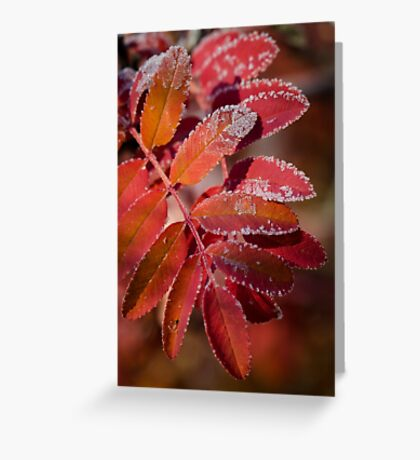 Mountain Ash In Red Greeting Card