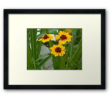 Plains Coreopsis With Buds Framed Print