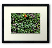 green pepper berries Framed Print