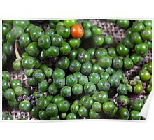 green pepper berries Poster