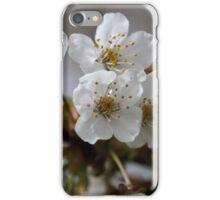 macro photo of cherry flowers iPhone Case/Skin