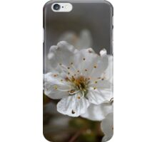 macro photo of cherry flowers iPhone Case/Skin