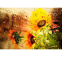 Wet Sunflower - Mike-Hope Photographic Print
