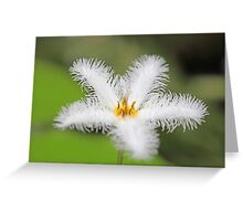 Flower of the  floatingheart nymphoides indica Greeting Card