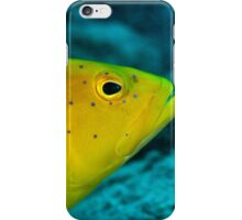 Coney Grouper iPhone Case/Skin