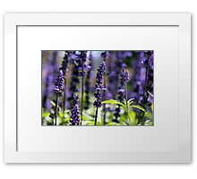 Mother Nature's Perfume Framed Print