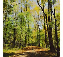 Green Woods Brink of Autumn Photographic Print