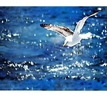 Gliding Seagull over ocean Photographic Print