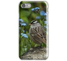 White Crowned Sparrow iPhone Case/Skin