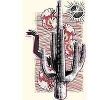 Cactus Photographic Print