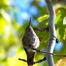A Hummingbirds prayer for the planet by RichImage