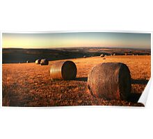 Golden Plain - Barrabool Hills Poster