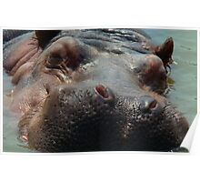 Hippo in need of a Shave !!! Poster