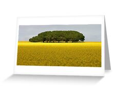 Trees in canola Field Greeting Card