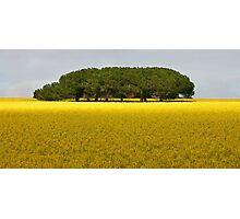 Trees in canola Field Photographic Print