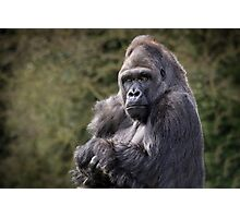 Gorilla portrait Photographic Print