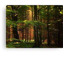 Forest in Hillerod (Denmark) Canvas Print