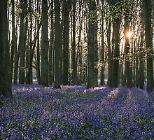 Bluebells by James  Key