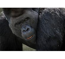 Silver back gorilla Photographic Print