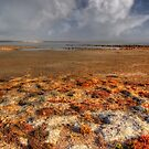 Coorong #2 by Bette Devine
