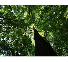 forest in transylvania Photographic Print
