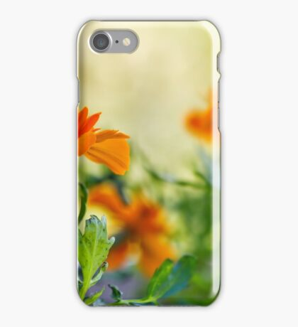 Marigold in garden iPhone Case/Skin