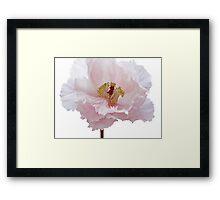 Pink Tree Peony Flower Framed Print