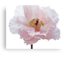 Pink Tree Peony Flower Canvas Print