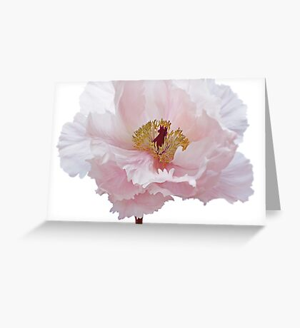 Pink Tree Peony Flower Greeting Card