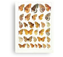 The Macrolepidoptera of the world a systematic account of all the known Butterflies Moths Adalbert Seitz V1 V3 1906 174 Argynnis Euptoieta Canvas Print