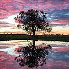 Mirror tree by David Haworth