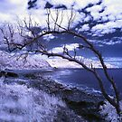 Winter in the Great Barrier Reef by marika